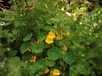planten in permacultuur-leertuin