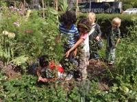 samen tuinieren in groentetuin, permacultuur-leertuin