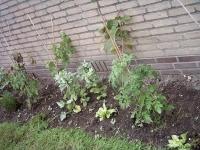 groente en planten in leertuin