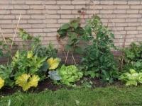 biologische groente en planten in permacultuurtuin