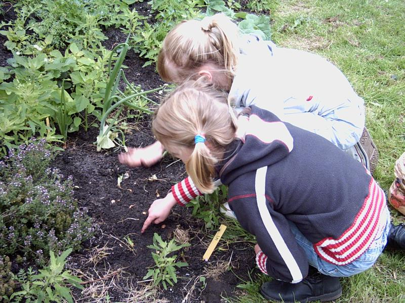 kinderen in permacultuur-leertuin